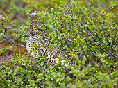 BRD 13 WF0002 01