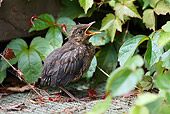 BRD 13 WF0007 01