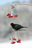 BRD 13 WF0009 01