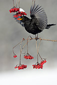 BRD 13 WF0010 01
