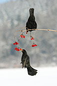 BRD 13 WF0012 01