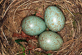 BRD 13 WF0013 01