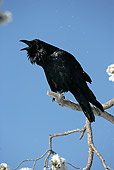 BRD 13 WF0025 01