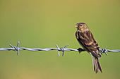 BRD 13 WF0027 01