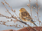 BRD 13 WF0029 01