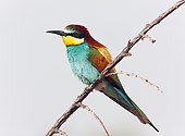 BRD 13 WF0035 01