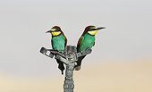 BRD 13 WF0037 01