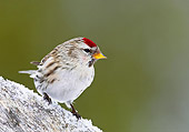 BRD 13 WF0038 01