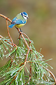BRD 13 WF0040 01