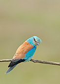 BRD 13 WF0043 01