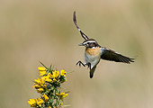 BRD 13 WF0049 01