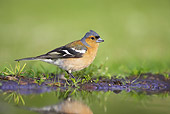 BRD 13 WF0050 01