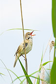 BRD 13 WF0055 01