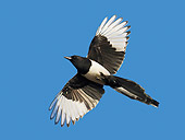 BRD 13 WF0063 01