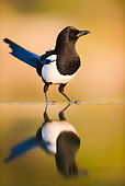 BRD 13 WF0064 01