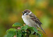 BRD 13 WF0067 01