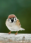 BRD 13 WF0068 01