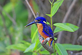 BRD 13 WF0072 01