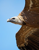 BRD 13 WF0075 01