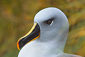 BRD 13 WF0080 01