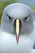 BRD 13 WF0081 01