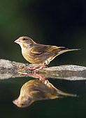BRD 13 WF0083 01
