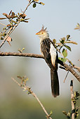 BRD 13 WF0084 01