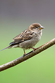 BRD 13 WF0090 01