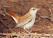 BRD 13 WF0091 01