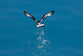BRD 13 WF0093 01