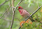 BRD 13 WF0095 01
