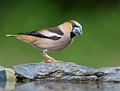 BRD 13 WF0102 01