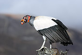 BRD 13 WF0105 01