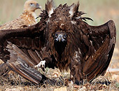 BRD 13 WF0109 01