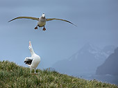 BRD 13 WF0120 01