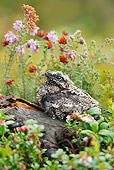BRD 13 WF0126 01