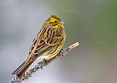 BRD 13 WF0135 01