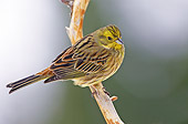 BRD 13 WF0136 01