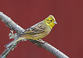 BRD 13 WF0137 01