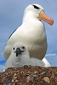 BRD 13 WF0140 01