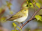 BRD 13 WF0149 01
