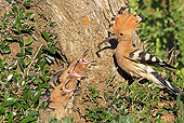 BRD 13 WF0150 01