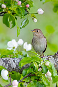 BRD 13 WF0152 01
