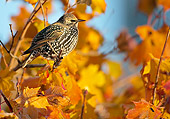 BRD 13 WF0154 01