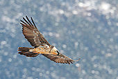 BRD 13 WF0164 01