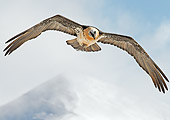 BRD 13 WF0167 01