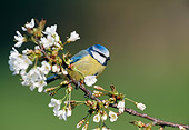 BRD 13 WF0185 01