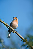 BRD 13 WF0187 01