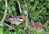 BRD 13 WF0190 01