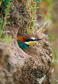BRD 13 WF0192 01